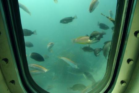 窓越しに見る海の中